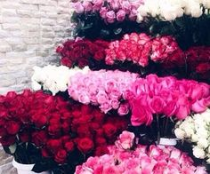 #red#pink#roses