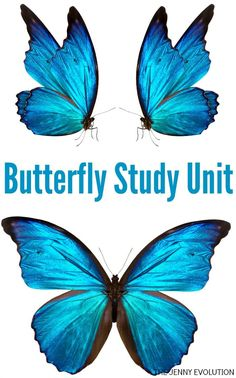 FREE Butterfly Study Unit Resources for Homeschool and the Classroom + Non Fiction Butterly Books for Kids
