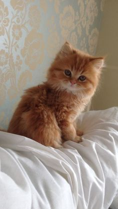 Precious little ginger kitty. #ginger #cats #kittens #pets #animals