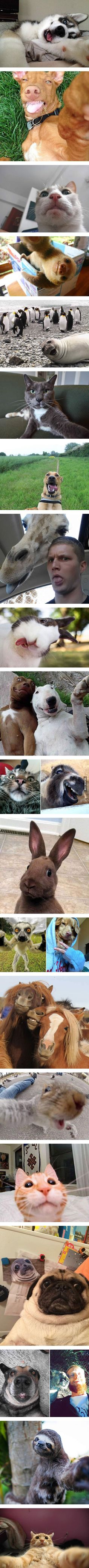 The Funniest Pictures Of Animals Posing For A Selfie