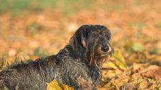 Feeding a Dog Bones – Weigh the Risks Against the Benefits