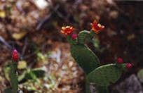 vegetaçao nativado brasil/caatinga - MySearch