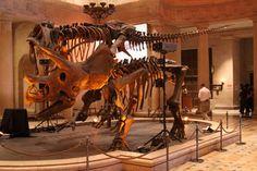 Dinosaur in main hall - Museum of Natural History Los Angeles - http://www.davestravelcorner.com