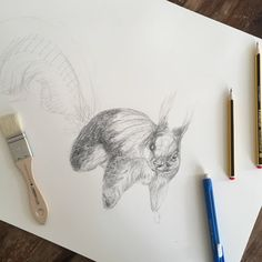 Sarah J. Loecker : Welcome Spring: A step by Step Squirrel drawing in... How To Draw Fur, Illustration Courses, Welcome Spring, Spring Step, First Photo, Animal Drawings, Art Tutorials, Graphite, Animals Beautiful