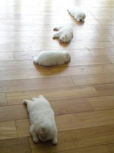 trail of puppies! I will marry a guy that gets me puppies to play with ❤️❤️❤️ Cute Puppies, Cute Dogs, Dogs And Puppies, Cute Babies, Chubby Puppies, Funny Dogs, Doggies, Animals And Pets, Baby Animals