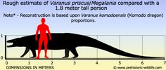 Varanus priscus (Megalania)
