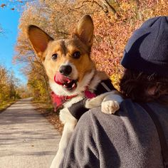 im going to daycare today! because ill be away from mom to play with dogs check out this augustnovember... Pembroke Welsh Corgi, Play, Mom, Check, Animals, Animales, Animaux, Animais, Animal