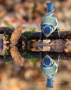 Reflections can be confusing!