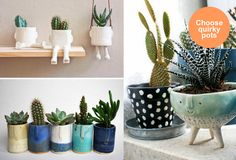 Cactus Crush: How to display cactus plants in your home | Design Lovers Blog