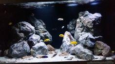 The best program cichlids fish fish fish Betta reefs aquarium fish fish sharks Cichlid Aquarium, Aquarium Aquascape, Diy Aquarium, Aquarium Design, Malawi Aquarium, Fish Aquarium Decorations, Aquarium Landscape, Planted Aquarium, Aquascaping