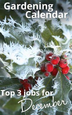 The top 3 most important gardening jobs for December - from TV Gardener David Domoney