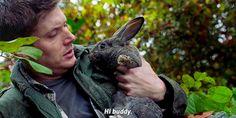 - Regarding Dean 12x12 - Dean with bunny! I repeat, Dean with bunny.