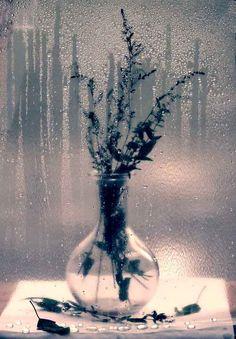 Фотография автора Magic Fly: Уже не лето... но ещё не осень...(461250) из альбома Натюрморт