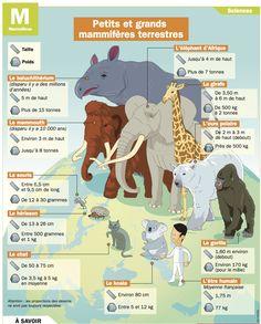 Fiche exposés : Petits et grands mammifères terrestres Study French, Learn French, Elephant Afrique, Flags Europe, Animals For Kids, Animals And Pets, French Resources, French Class, Animal Facts