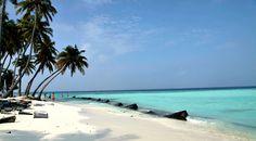 14 best maldives images maldives the maldives diving rh pinterest com