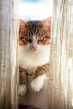 Mimi on the window sill