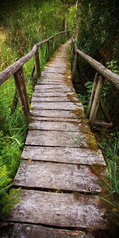 Rustic wood footpath in Fraser Valley, Canada