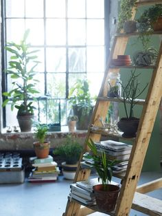 All the plants; plants on rungs of a ladder in a loft