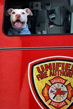 Fire dog! |