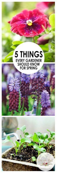 Gardening, Gardening Hacks, Spring Gardening, How to Garden In Spring, Plants for Spring, Plants to Begin Growing In Spring, Outdoor Projects, Gardening Projects, DIY Gardening Projects, Popular Pin, Popular Gardening Pin