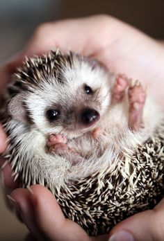 64 Adorable iPhone Animal Wallpaper HD - The One Percent Iphone Wallpaper Size, Tier Wallpaper, Animal Wallpaper, Wallpaper Backgrounds, Smiling Animals, Cute Baby Animals, Baby Animals Pictures, Cute Hedgehog, Make Me Smile