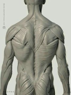 Exceptional Drawing The Human Figure Ideas. Staggering Drawing The Human Figure Ideas. Human Anatomy For Artists, Human Anatomy Drawing, Human Body Anatomy, Human Figure Drawing, Muscle Anatomy, Life Drawing, Anatomy Back, Anatomy Study, Anatomy Reference