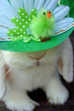 Bunny Easter Bonnet