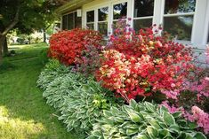 azalea bushes and hostas in front of gray house - Google Search: