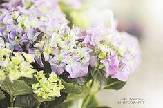 Floral folies ortensie 1