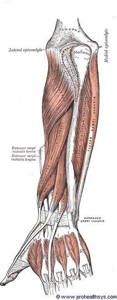 Henry Gray Anatomy of the Human Body. Arte Com Grey's Anatomy, Anatomy Art, Greys Anatomy, The Human Body, Human Anatomy Drawing, Human Figure Drawing, Arm Drawing, Drawing Faces, Drawing Tips