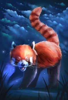 Another red panda, they are so cute ! Hope you like it Happy Red Panda! Red Panda Cute, Panda Love, Panda Wallpapers, Cute Cartoon Wallpapers, Anime Animals, Cute Animals, Baby Animals, Bristol Zoo, Panda Drawing