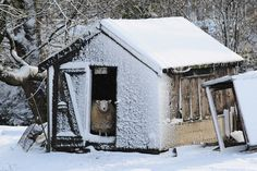 Feb. 5, 2013. A sheep looks out from its snow covered shed in Penistone, South Yorkshire.