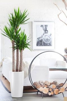 Considering a desert house plant like this yucca or just liven up your home with low maintenance house plants? Greenery and house plants will never go out of style, but tropical house plants in particular are having a moment and oh so trendy. If you don't want a high maintenance fiddle leaf fig or a monstera but still want a lovely house plant, green, pink, yellow and more, tap to read this blog post. 5 Indoor Houseplant Trends for 2020 | Hadley Court - Interior Design Blog Shades Of White, Shades Of Green, Tropical House Plants, Colorful Succulents, Fiddle Leaf Fig, Desert Homes, Spider Plants, High Maintenance, Herbs Indoors