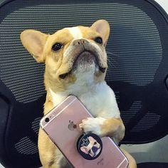 dog イヌ 犬可愛い画像まとめ http://ift.tt/1OTlZW0