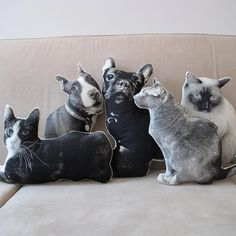 Transform Your Favorite Pets Photo Into A Pillow - Shannon Broder (hehe)