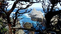 Gnarled branches and the granite rocks of Point Lobos frame turquoise waters at the edge of fog-bound Carmel Bay, Calif. (Brian J. Cantwell/The Seattle Times) Monterey Cypress, San Francisco Tours, Seattle Times, Turquoise Water, Big Sur, Vacation Destinations, Mount Rushmore, Earth, Places