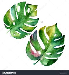 stock-photo-tropical-leaves-in-watercolor-isolated-on-white-215335843.jpg (1475×1600)
