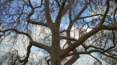 Help Your Trees Survive the Cold of Winter With These Expert Tips #Tree #Landscaping #Gardening