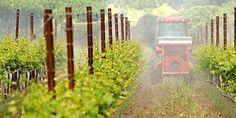 Bio Bloggando: Prosecco e pesticidi: quando i soldi valgono più d...