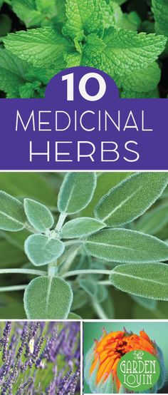 A good medicinal herb garden includes herbs and plants that are easy to use and have practical applications. Here are 10 medicinal plants to get you started.