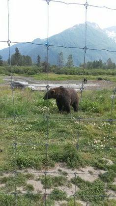 7•18•16 《Brown Bear》