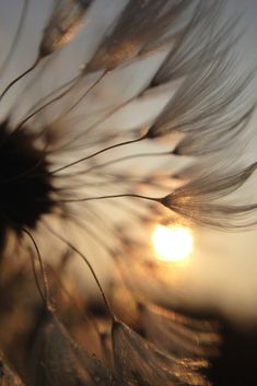 iPhone macro of a dandelion Brown Aesthetic, Aesthetic Art, Cute Backgrounds, Wallpaper Backgrounds, Dandelion Wallpaper, Pop Art Wallpaper, Macro Photography, Nature Pictures, Belle Photo