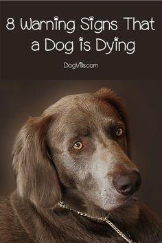 dog care,dog stuff,dog tips,dog training,dog hacks Dog Health Tips, Dog Health Care, Dog Care Tips, Pet Care, Puppy Care, Pet Tips, Education Canine, Dog Information, Dog Facts