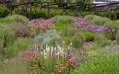 """Chicago - Architecture & Cityscape: Lurie Garden: """"The New Wave Planting Style"""""""