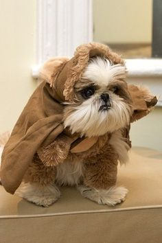 shih tzu ewok ~ this is not one of my babies. They'd kill me if I dressed them up like this. He is cute though!!