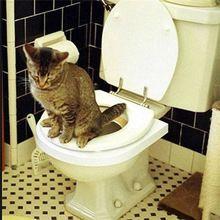 Практическая мини маленькая собака легко узнать pet cat туалет мест обучения комплект системы продукции аксессуары для кошек домашних животных(China (Mainland))