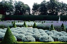 topiaries hedges