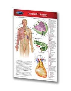 Lymphatic System (Pocket Size) - laminated chart. A detailed overview of the lymphatic system in your pocket. In this chart, the drainage of the lungs, breast, heart, and other major organs are illustrated and labeled in great detail.