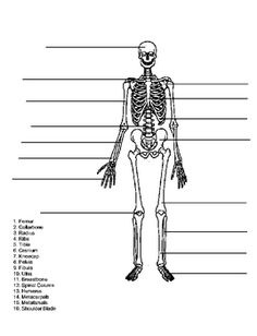 4th grade science worksheets skeleton | skeleton-diagram-life, Skeleton
