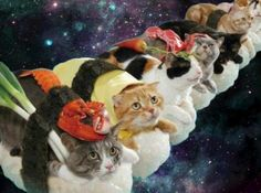 9/9 of cats in space